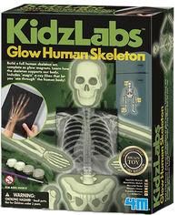 Набор для творчества 4M Светящийся скелет человека (00-03375) (4893156033758) от Rozetka