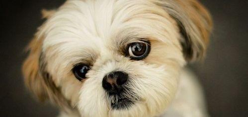 Акция на Комплексный уход за собаками малых пород от Pokupon